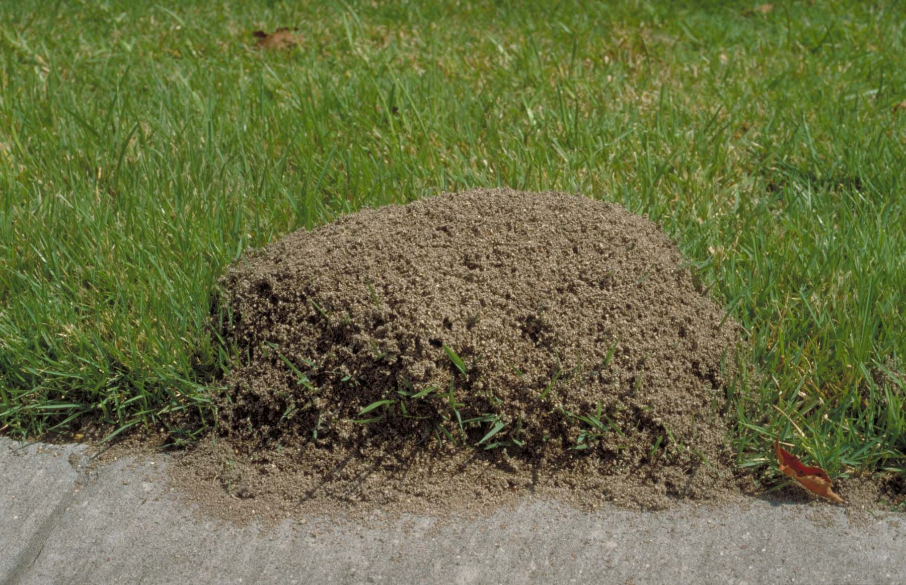 Pest Control in Bedford - Euless - Irving - Grapevine