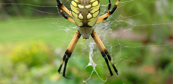 Pest Control in Bedford - Euless - Irving - Grapevine - Southlake ...